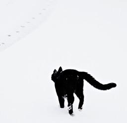 [Foto] Un gato negro en la nieve